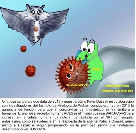 (Figura proporcionada por Meng Wang,  Wuhan Institute of Virology).
