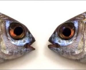 Ilustración: http://tribulacioneschino.blogspot.com.es