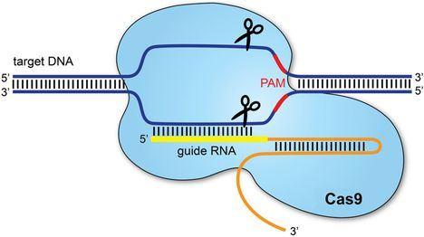 Ilustración: www.ep.bmj.com